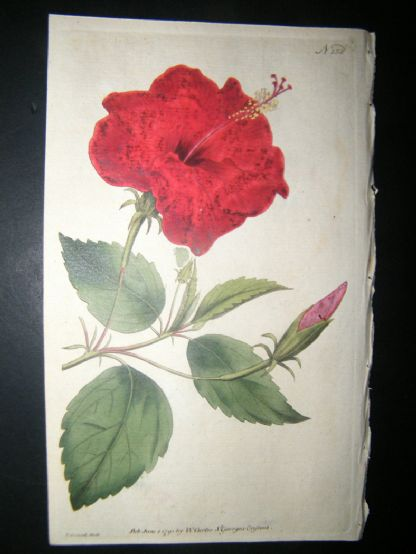 Curtis 1791 Hand Col Botanical Print. China-Rose Hibiscus 158 | Albion Prints